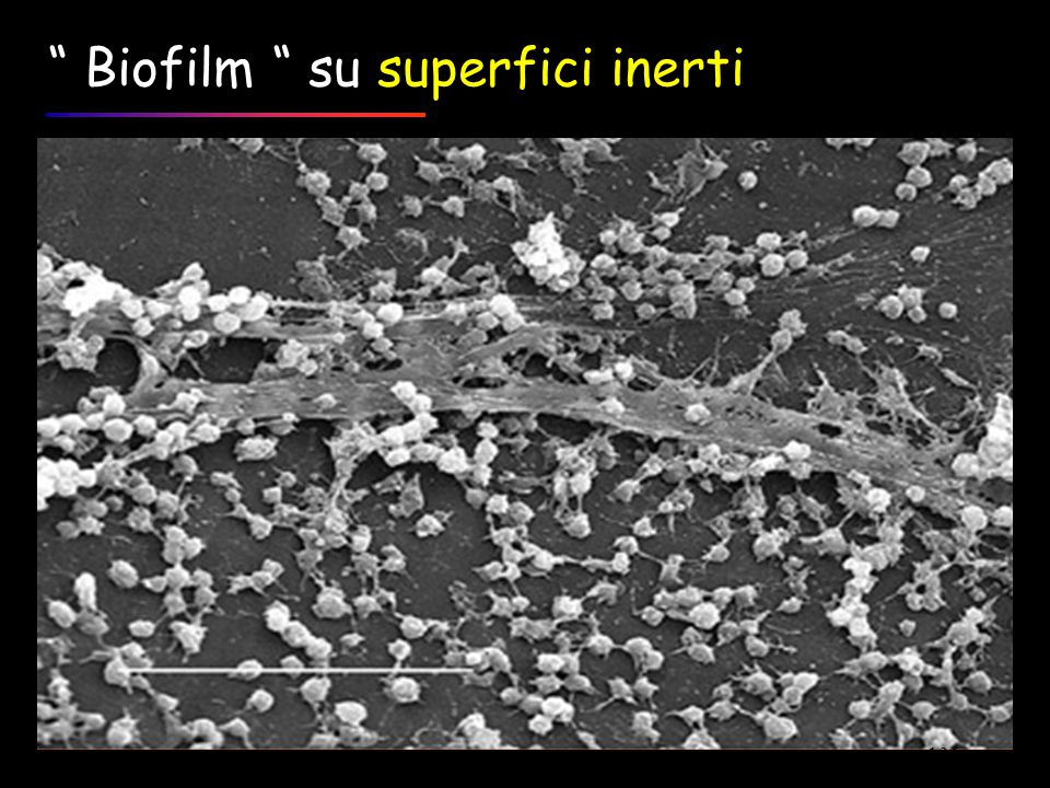 Biofilm su superfici inerti