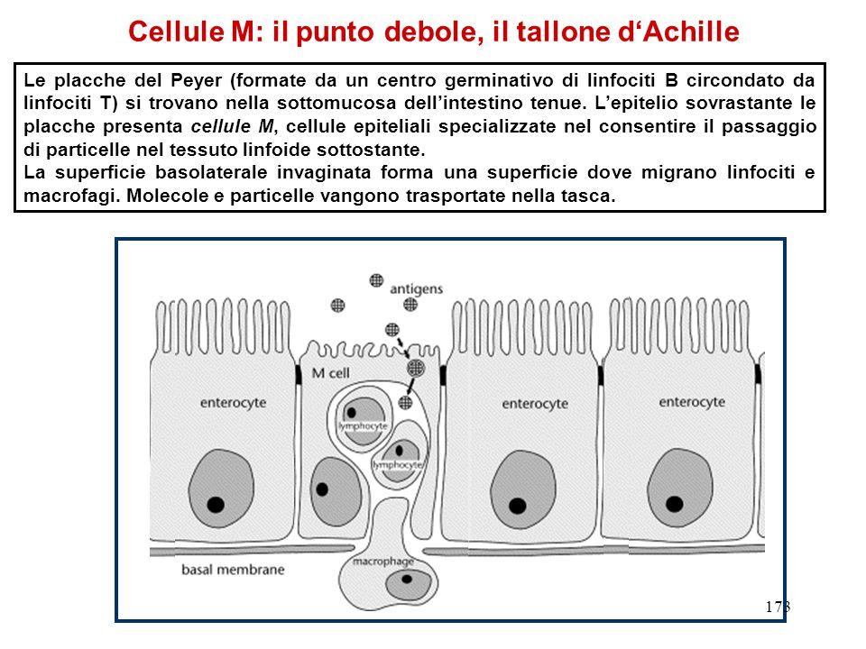 Cellule M: il punto debole, il tallone d'Achille
