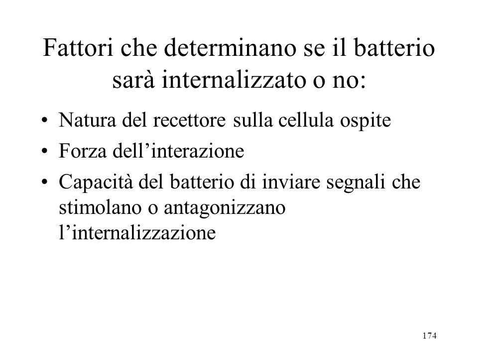 Fattori che determinano se il batterio sarà internalizzato o no: