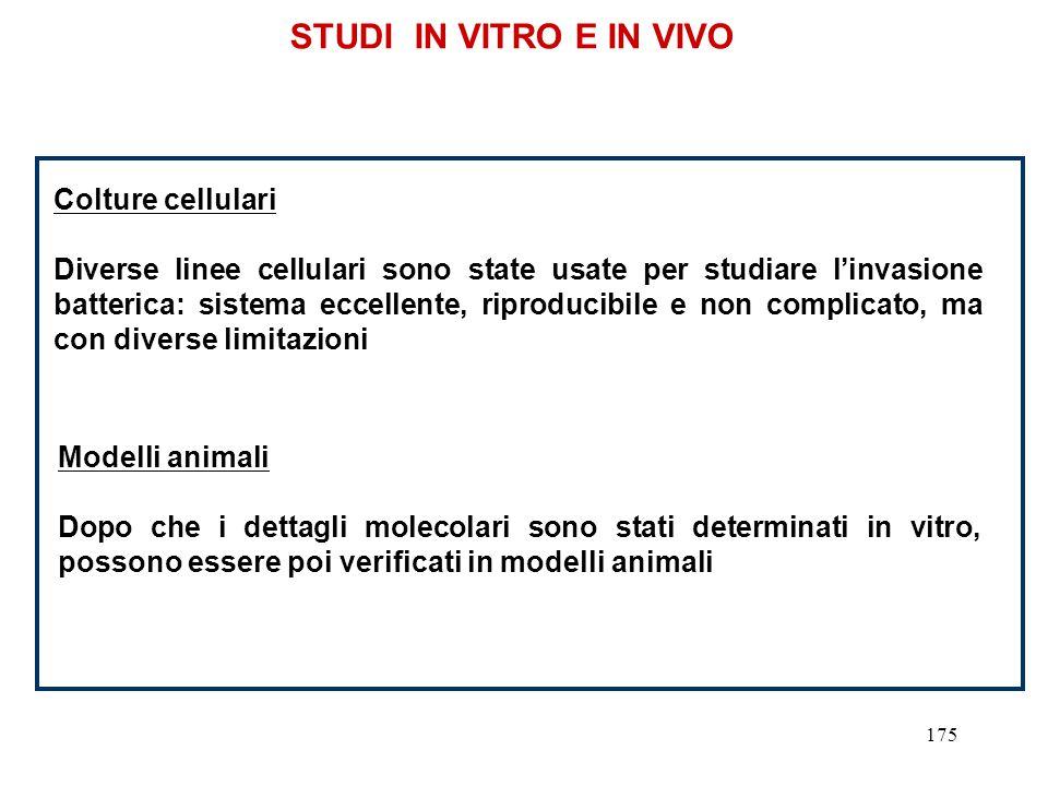 STUDI IN VITRO E IN VIVO Colture cellulari