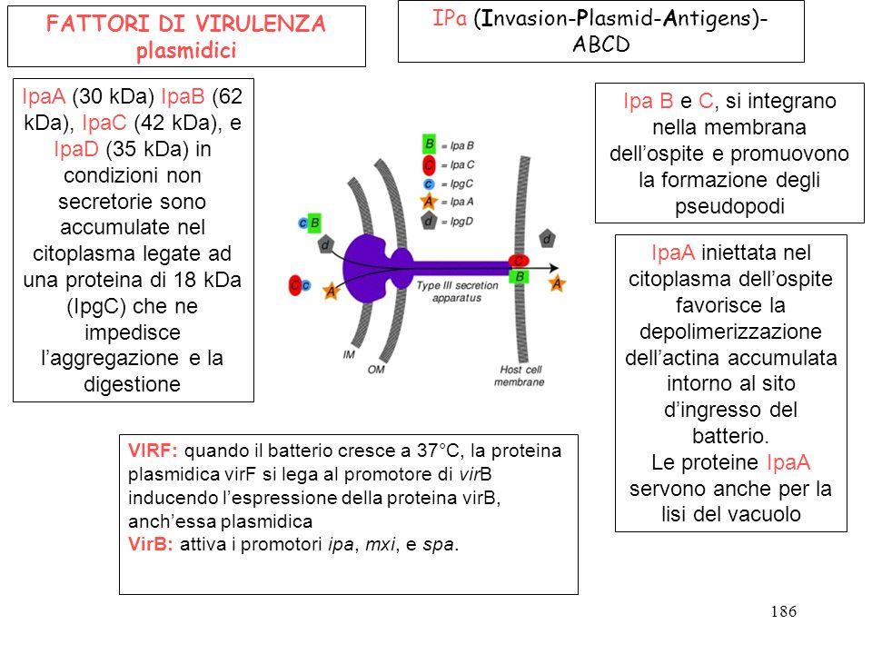 FATTORI DI VIRULENZA plasmidici