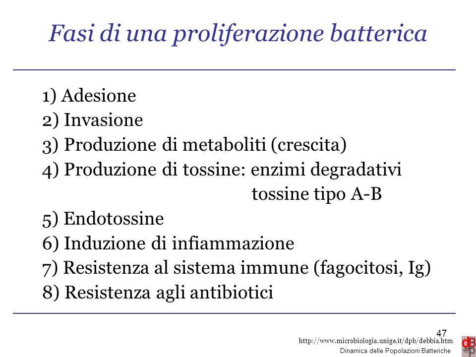 Fasi di una proliferazione batterica