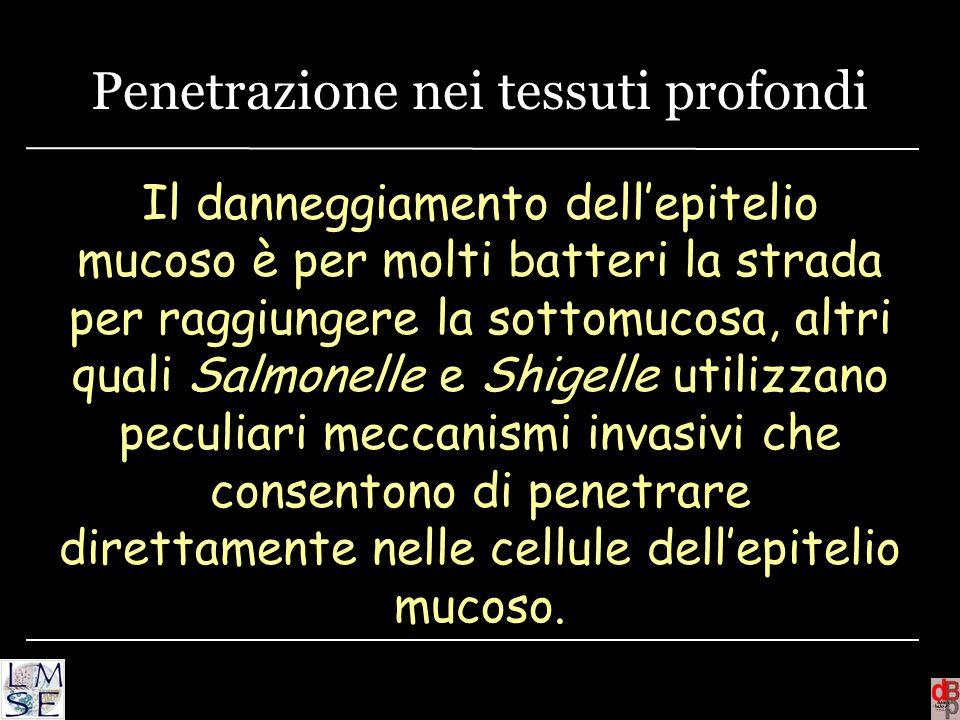 Penetrazione nei tessuti profondi