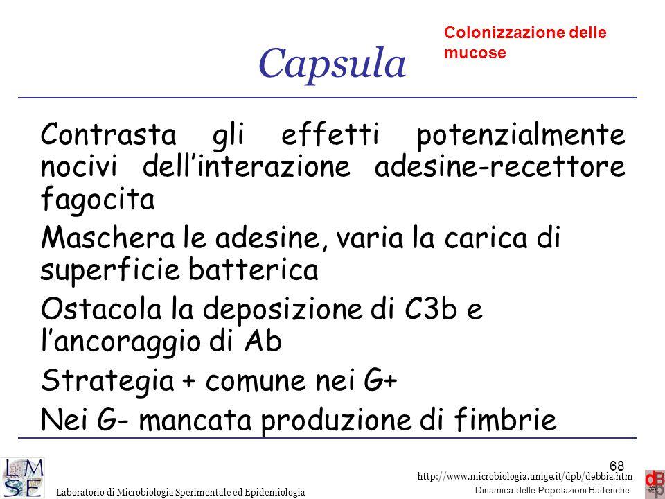 Capsula Colonizzazione delle mucose. Contrasta gli effetti potenzialmente nocivi dell'interazione adesine-recettore fagocita.