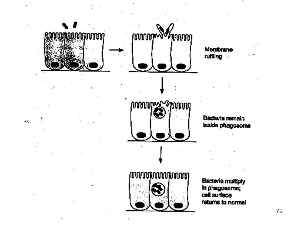 Le salmonelle penetrano attraverso la porzione apicale della membrana cellulare all'interno delle cellule dell' epitelio mucoso del COLON . Questa proprietà è mediata da proteine effetrici che vengono traslocate nel citosl mediante sistema secIII e provocan o riorganizzazione dei filamenti di actina con inglobazione del batterio nel citosol. Con meccanismo analogo il batterio passa anche nelle cellule contigue