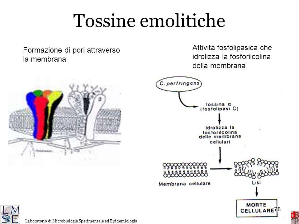 Tossine emolitiche Attività fosfolipasica che idrolizza la fosforilcolina della membrana. Formazione di pori attraverso la membrana.