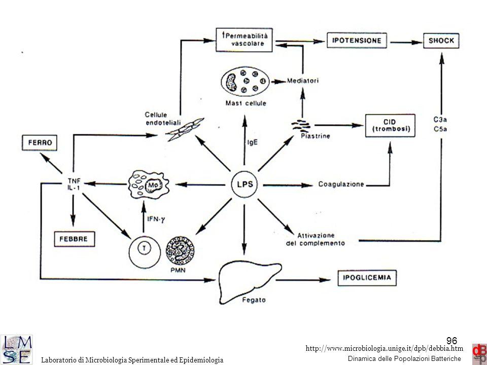I principali mediatori cellulari rilasciati dai macrofagi attivati in seguito al legame con l'LPS, sono rappresentati da TNF e IL-1. TNF è una citochina pleotropa con una serie di effetti su nemrosi elementi cellulari. Insieme a IL-1, responsabile primaria dell'azione pirogena, attiva la via metabolica dell'acido arachidonico con la produzione di prostaglandine che agiscono sugli endoteli (causando aumento della permeabilità vascolare, vasodilatazione, ipotensione e shock emodinamico) ha azione mitogena sui linfociti con incremento della produzione di interferone gamma, induce l'aumento del catabolismo proteico, rallenta il metabolismo del Fe, agisce sul fegato con conseguente ipoglicemia e stimola il fegato alla produzione di beta2-microglobulina a altre proteine cosiddette della fase acuta, svolgendo azione proinfiammatoria.