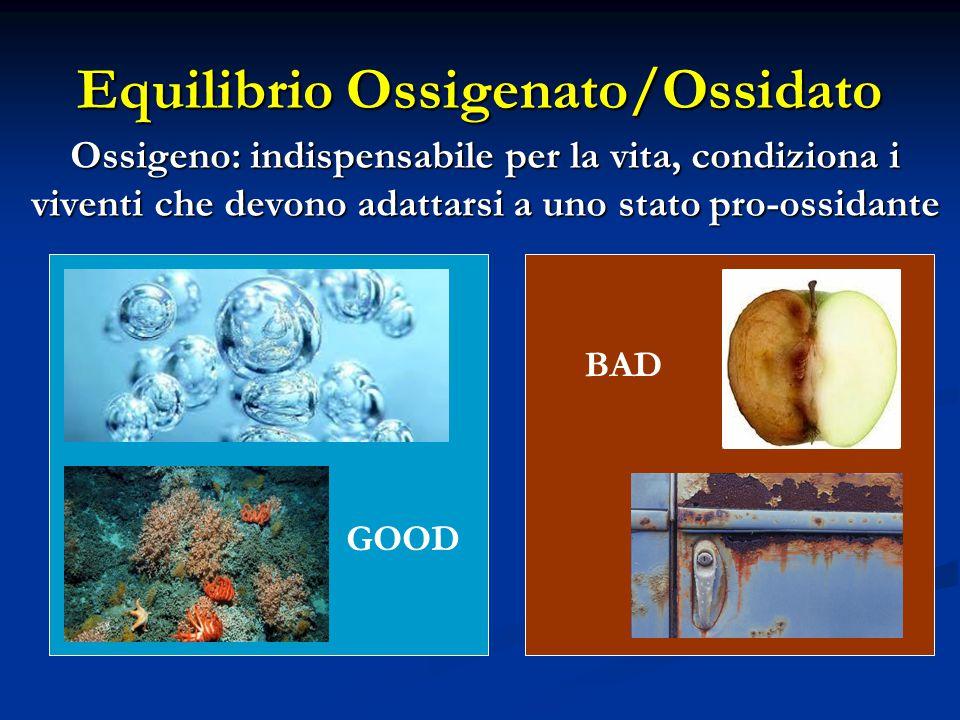 Equilibrio Ossigenato/Ossidato