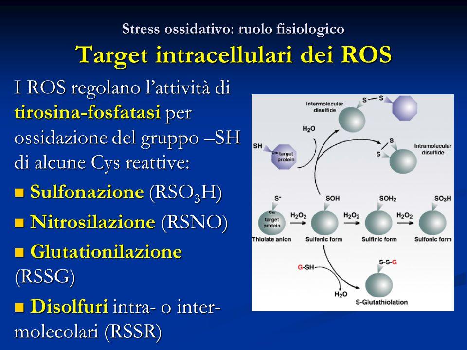 Stress ossidativo: ruolo fisiologico Target intracellulari dei ROS