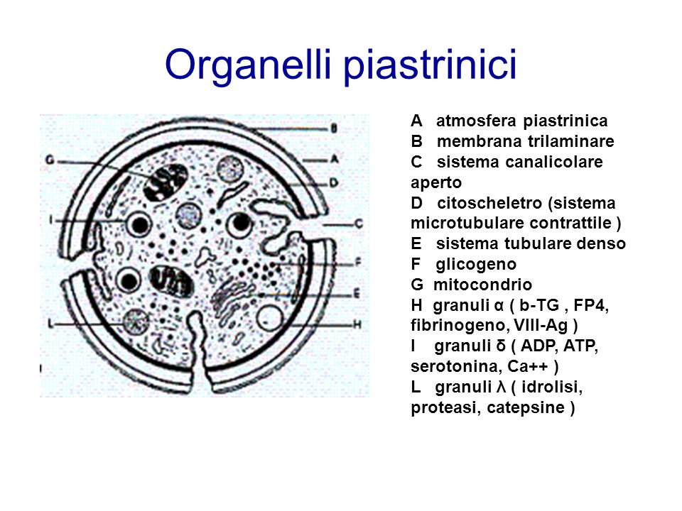 Organelli piastrinici