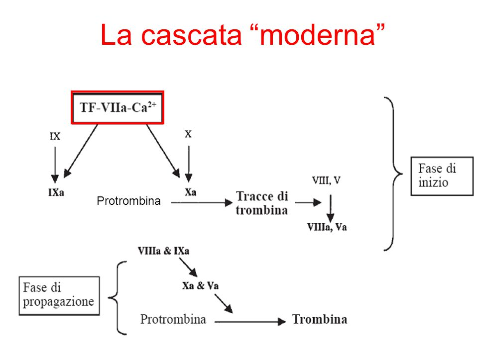 La cascata moderna Protrombina