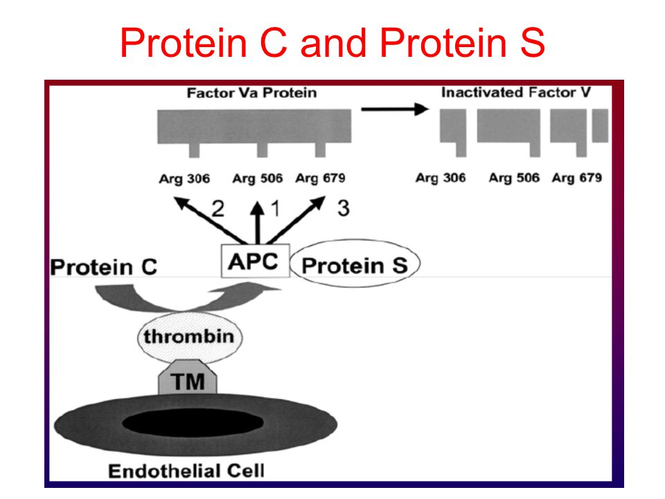 Protein C and Protein S