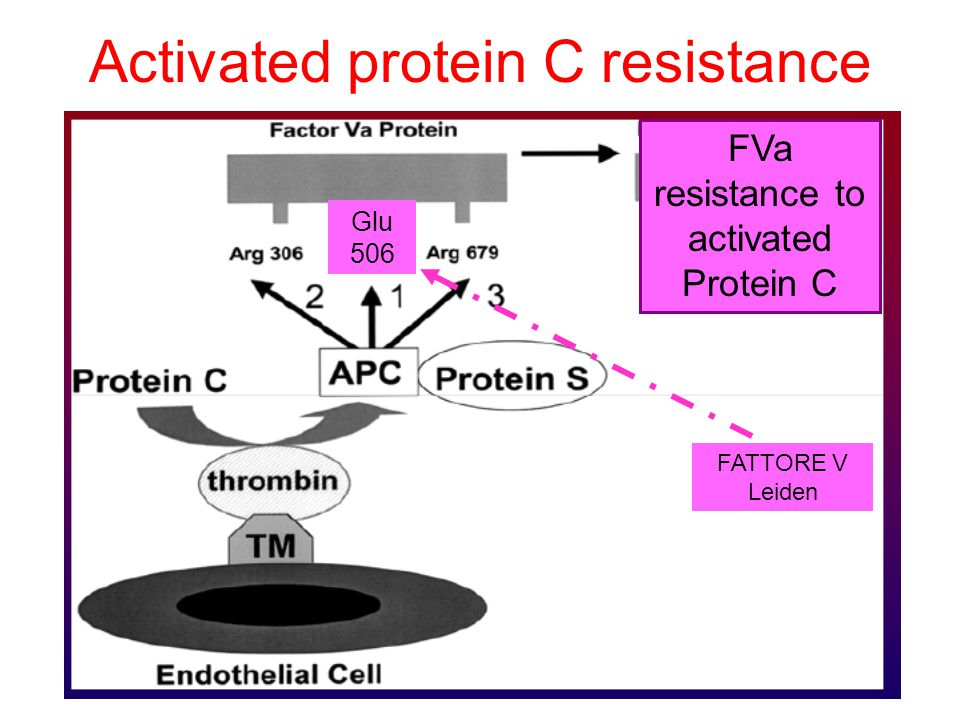 Activated protein C resistance