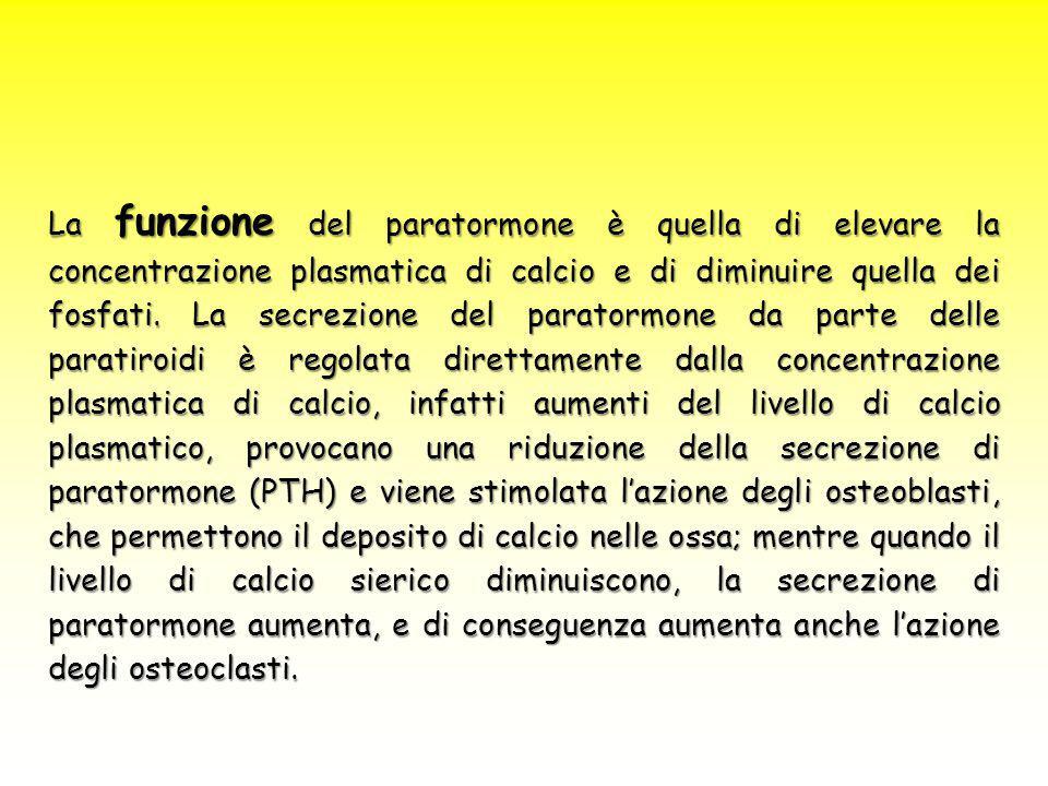 La funzione del paratormone è quella di elevare la concentrazione plasmatica di calcio e di diminuire quella dei fosfati.