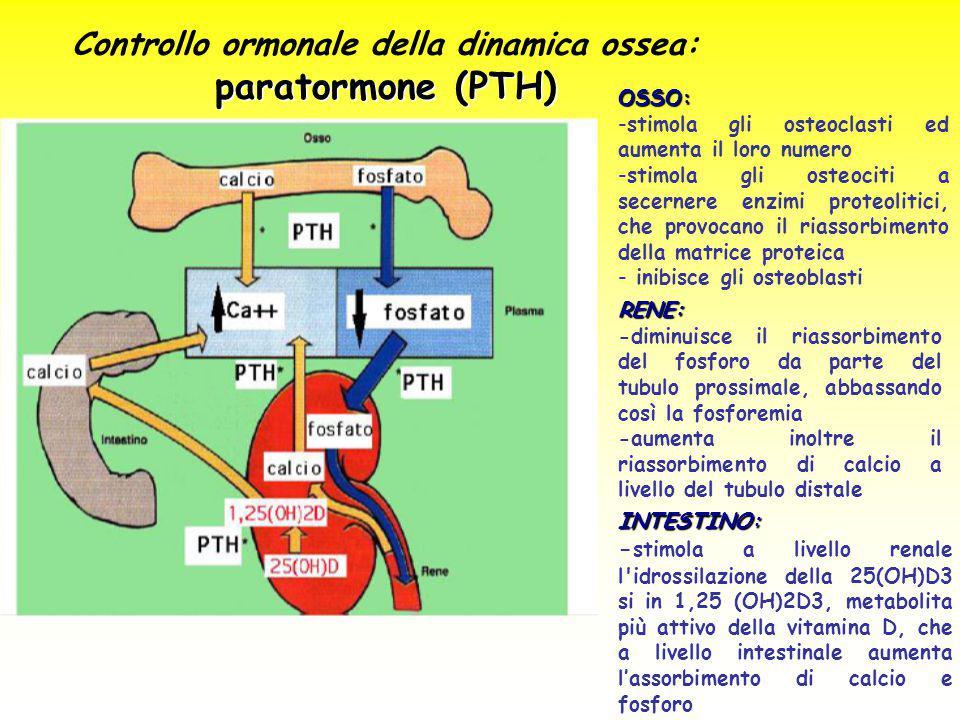 Controllo ormonale della dinamica ossea: paratormone (PTH)