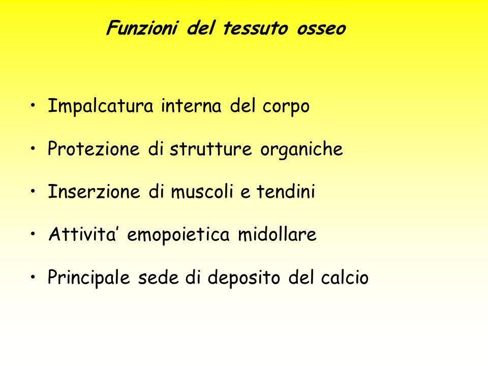 Funzioni del tessuto osseo