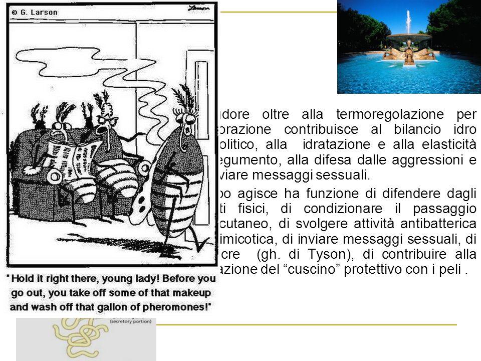 Attività secretiva