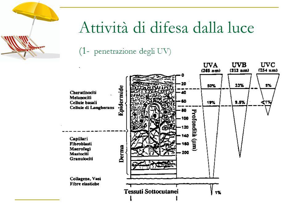 Attività di difesa dalla luce (1- penetrazione degli UV)