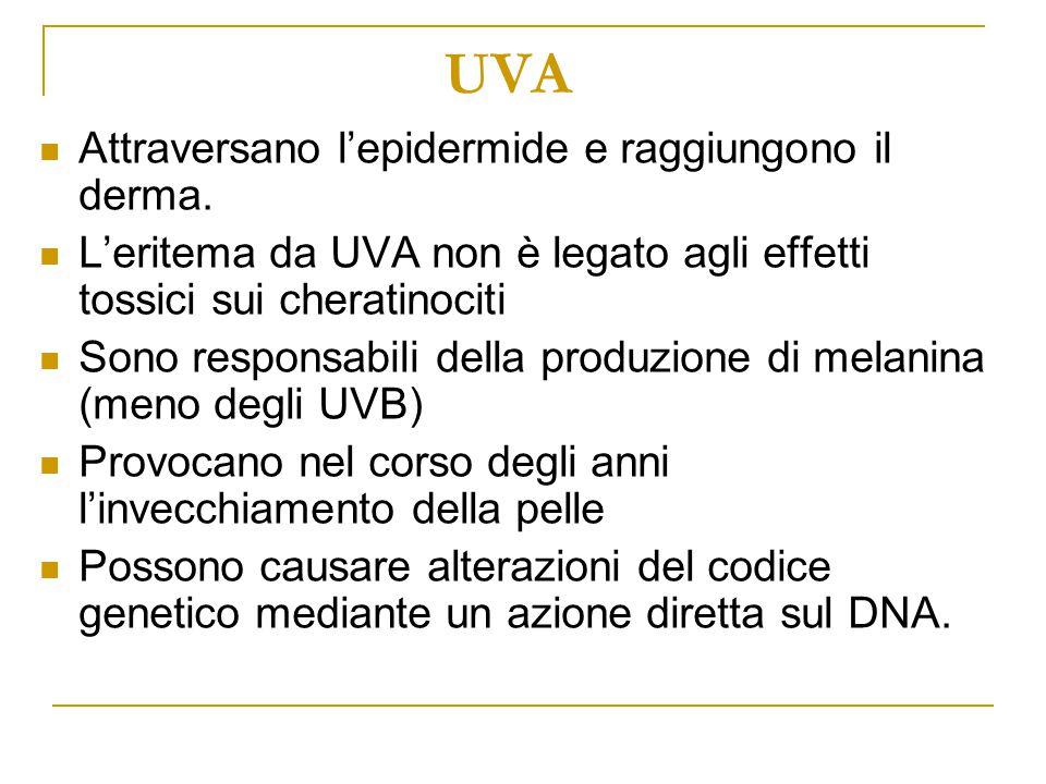 UVA Attraversano l'epidermide e raggiungono il derma.