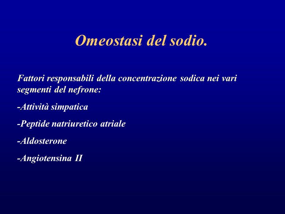 Omeostasi del sodio. Fattori responsabili della concentrazione sodica nei vari segmenti del nefrone: