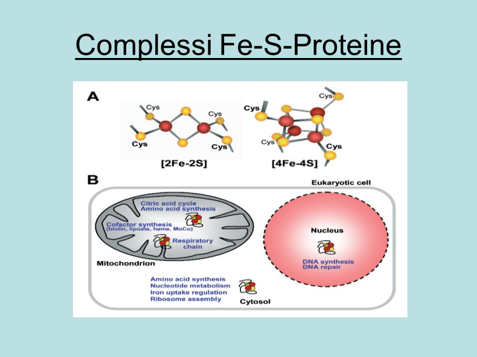 Complessi Fe-S-Proteine