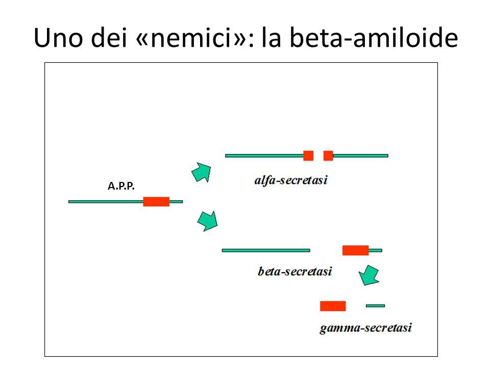 Uno dei «nemici»: la beta-amiloide