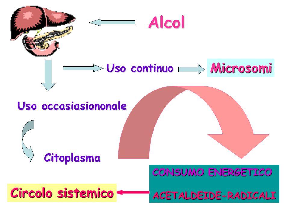Alcol Microsomi Circolo sistemico Uso continuo Uso occasiasiononale