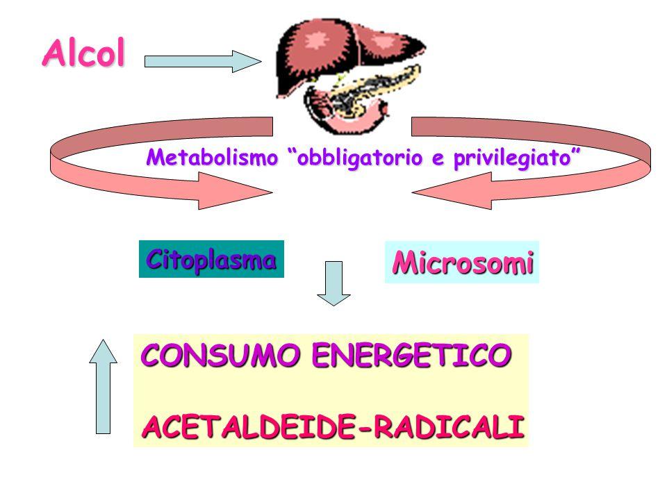 Alcol Microsomi CONSUMO ENERGETICO ACETALDEIDE-RADICALI Citoplasma