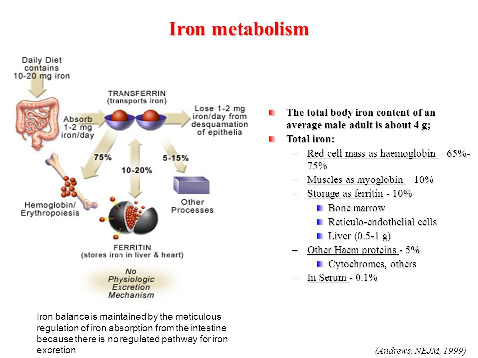Iron metabolism The total body iron content of an average male adult is about 4 g; Total iron: Red cell mass as haemoglobin – 65%-75%