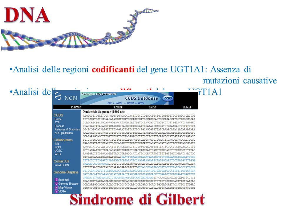 DNA Sindrome di Gilbert