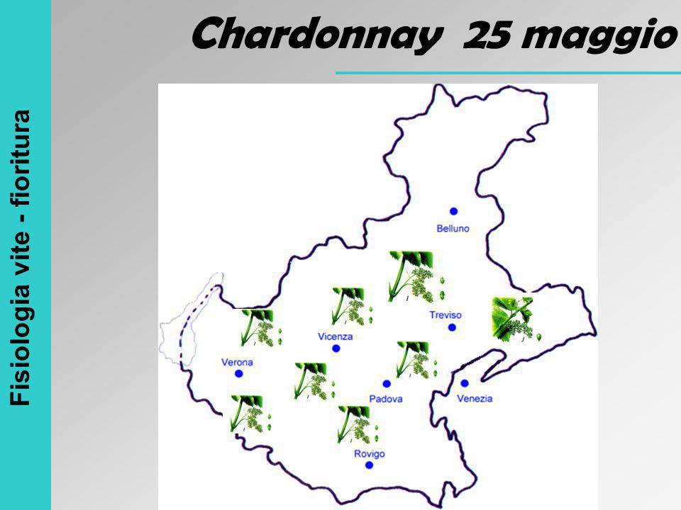 Chardonnay 25 maggio Fisiologia vite - fioritura
