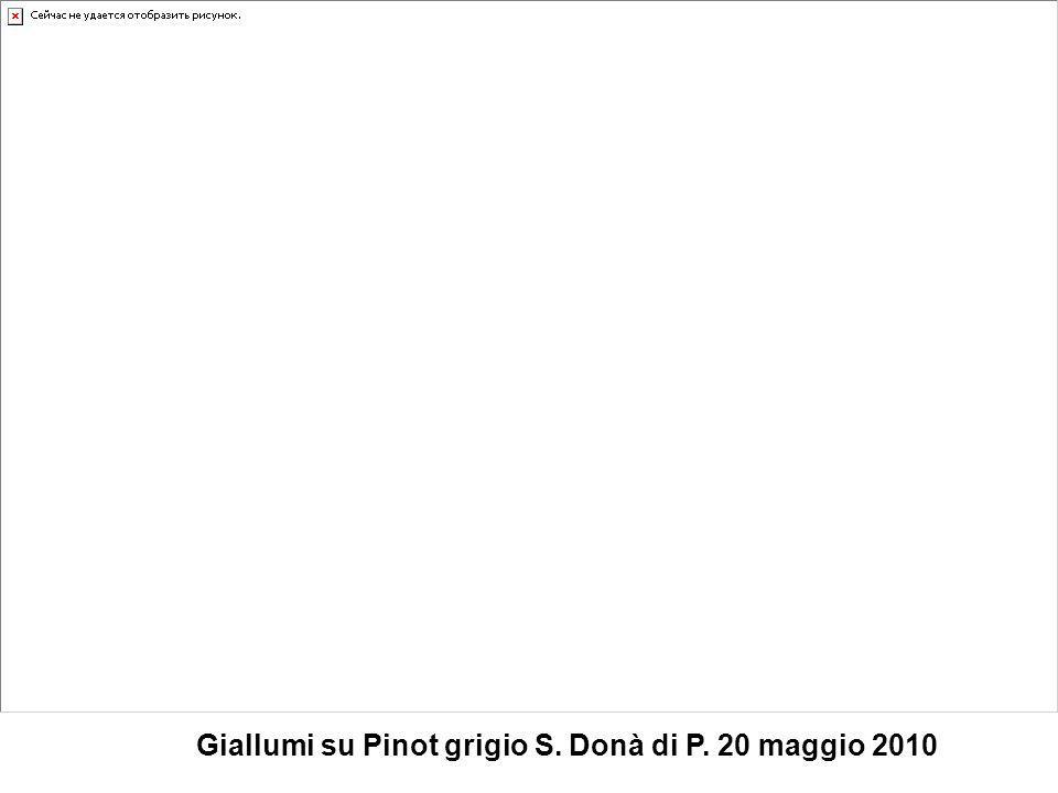 Giallumi su Pinot grigio S. Donà di P. 20 maggio 2010