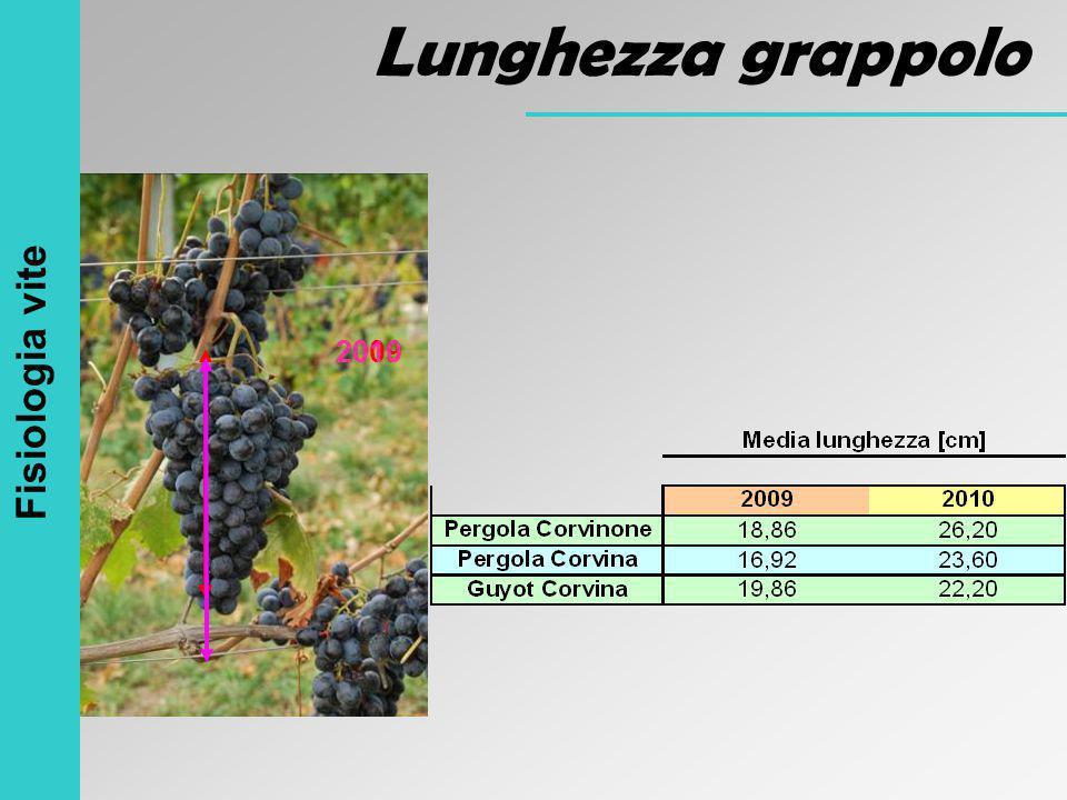 Lunghezza grappolo Fisiologia vite 2010 2009