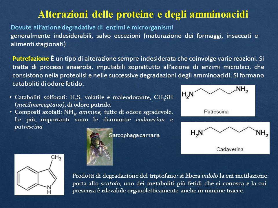 Alterazioni delle proteine e degli amminoacidi