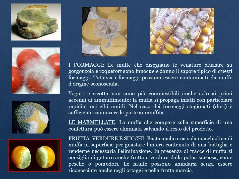 I FORMAGGI: Le muffe che disegnano le venature bluastre su gorgonzola e roquefort sono innocue e danno il sapore tipico di questi formaggi. Tuttavia i formaggi possono essere contaminati da muffe d origine sconosciuta.