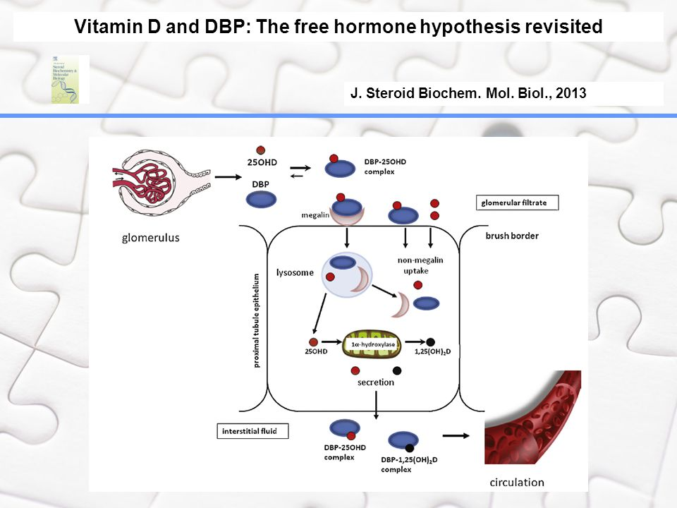 Vitamin D and DBP: The free hormone hypothesis revisited