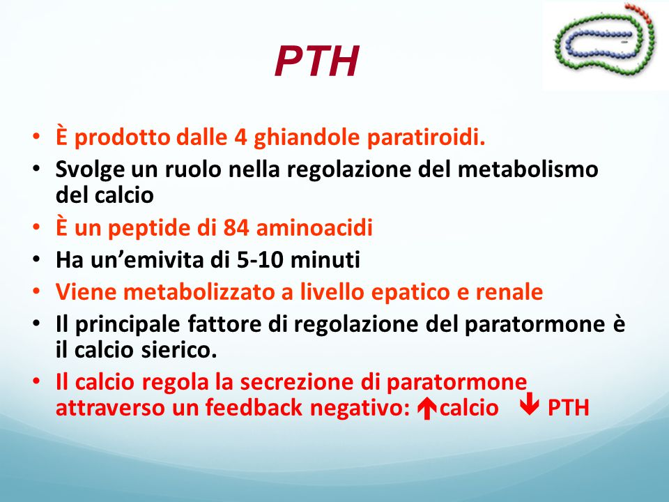 PTH È prodotto dalle 4 ghiandole paratiroidi.