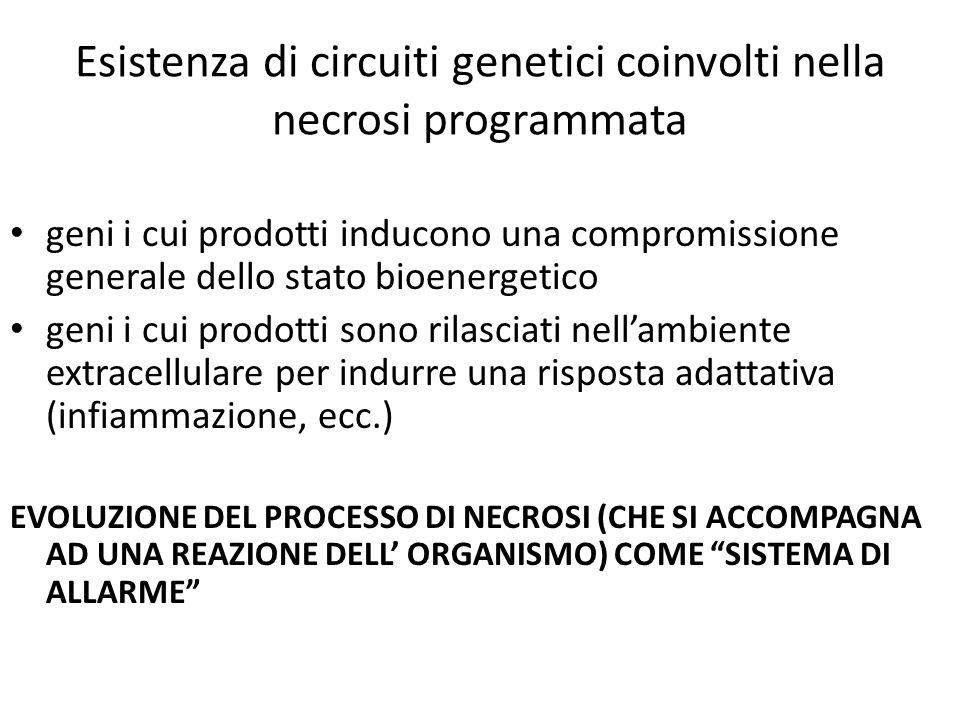 Esistenza di circuiti genetici coinvolti nella necrosi programmata