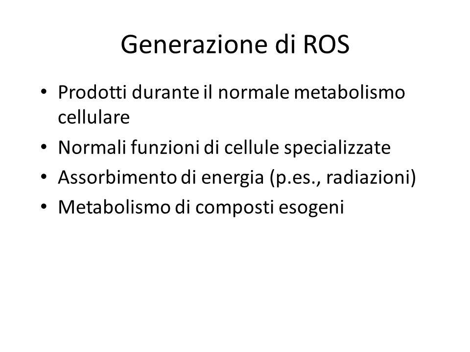 Generazione di ROS Prodotti durante il normale metabolismo cellulare