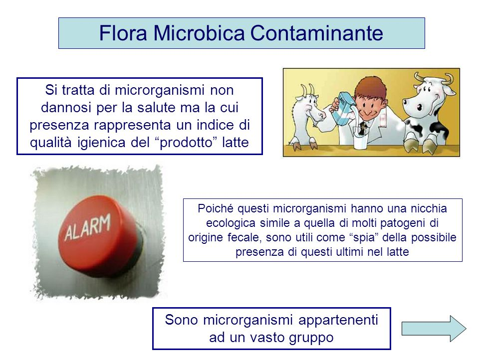 Flora Microbica Contaminante