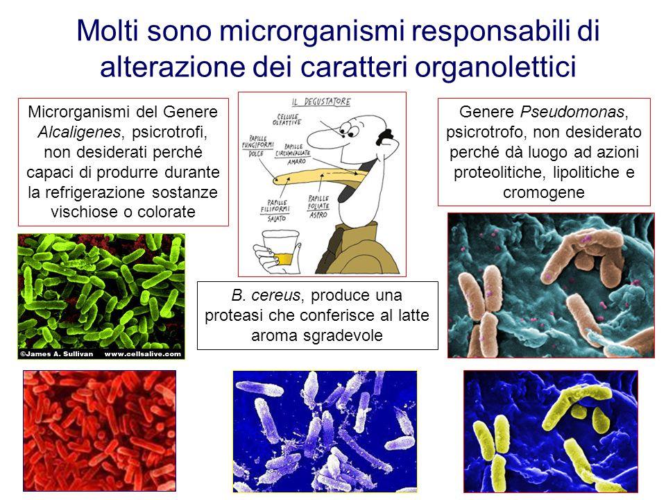 Molti sono microrganismi responsabili di alterazione dei caratteri organolettici