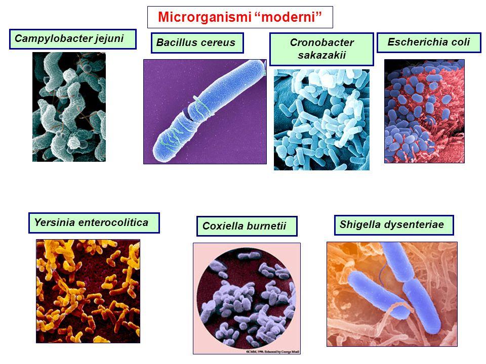 Microrganismi moderni Cronobacter sakazakii