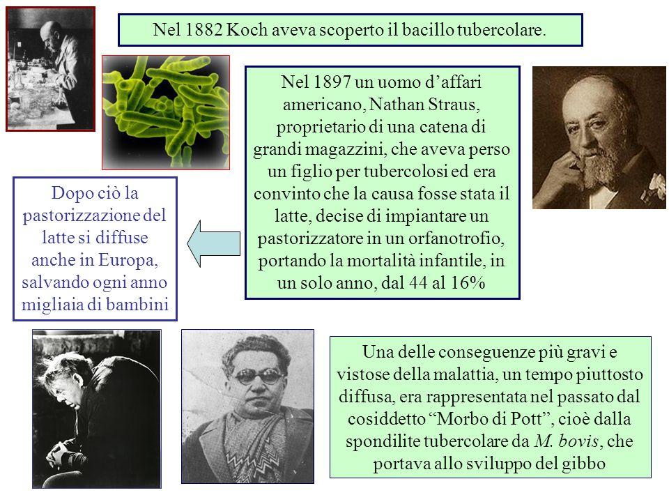 Nel 1882 Koch aveva scoperto il bacillo tubercolare.
