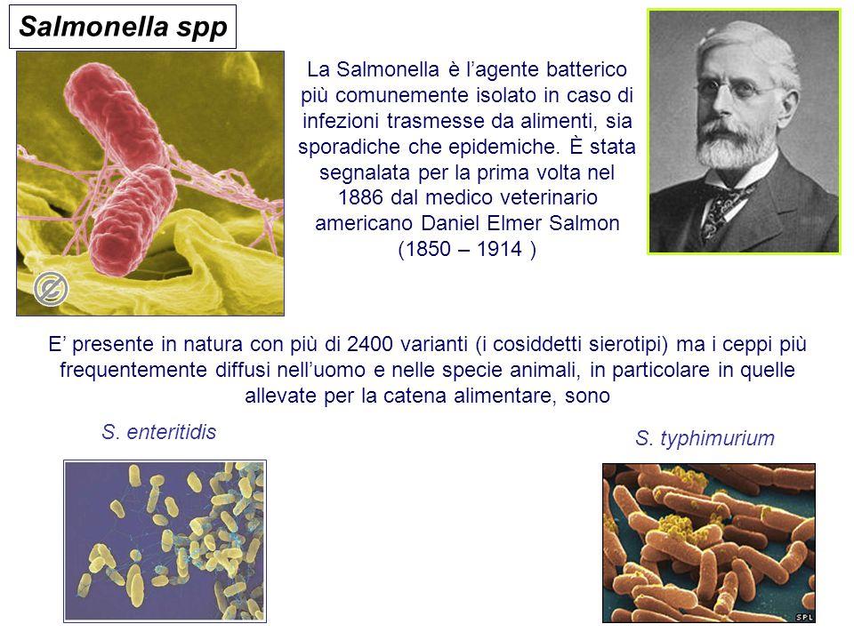 Salmonella spp