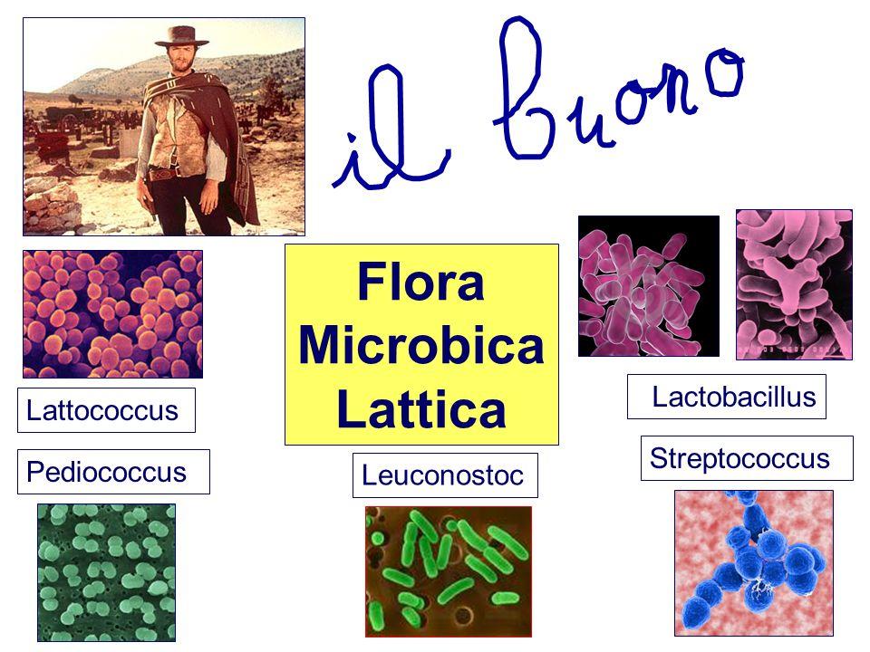 Flora Microbica Lattica