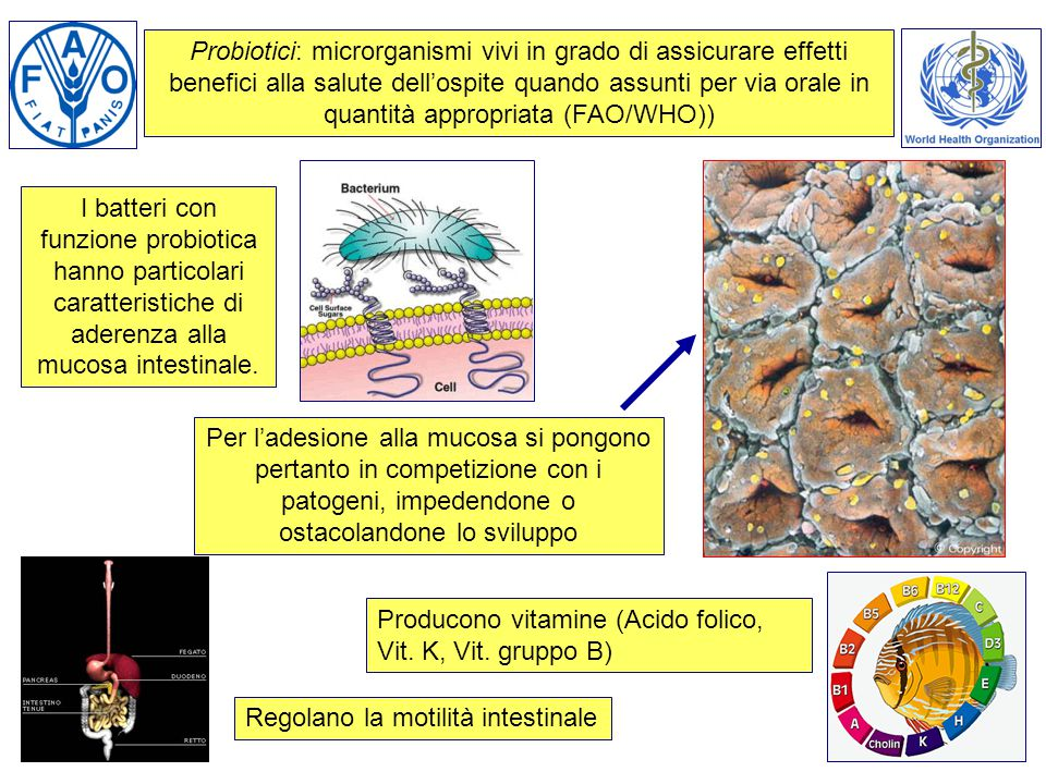 Probiotici: microrganismi vivi in grado di assicurare effetti benefici alla salute dell'ospite quando assunti per via orale in quantità appropriata (FAO/WHO))
