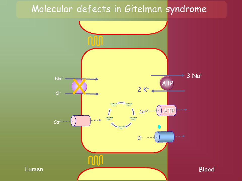 Molecular defects in Gitelman syndrome