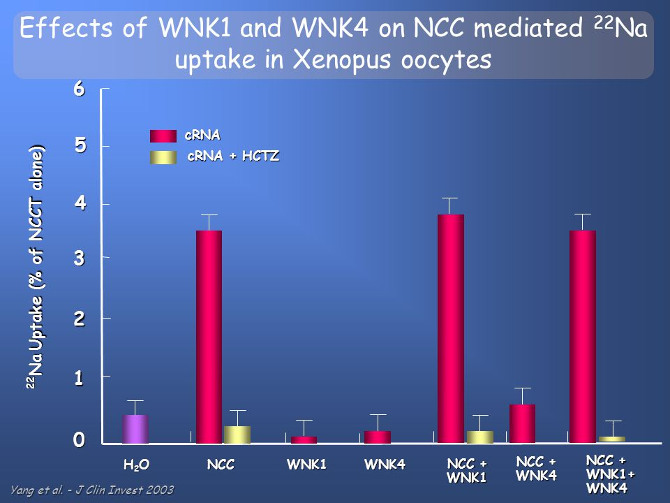 Effects of WNK1 and WNK4 on NCC mediated 22Na uptake in Xenopus oocytes