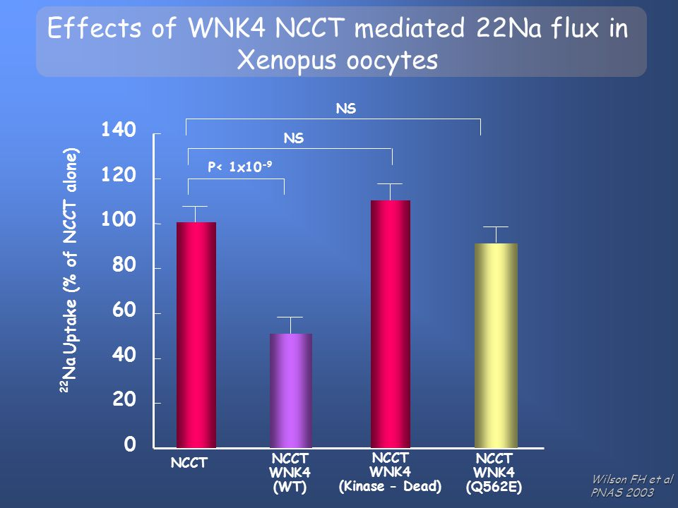 Effects of WNK4 NCCT mediated 22Na flux in Xenopus oocytes