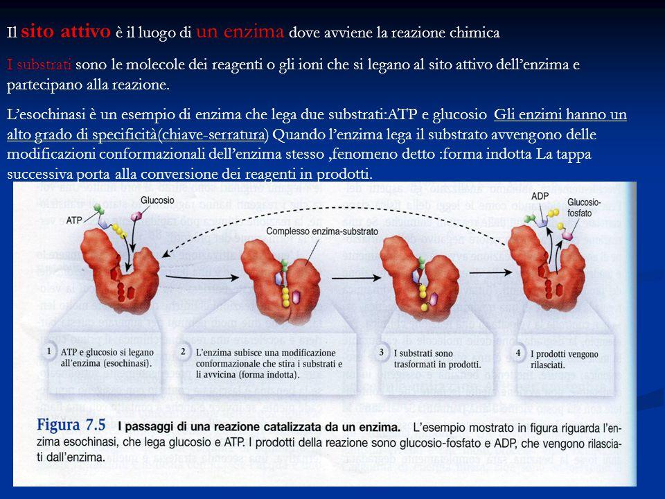 Il sito attivo è il luogo di un enzima dove avviene la reazione chimica